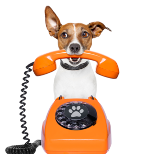 dog-calling-700-277x300 About