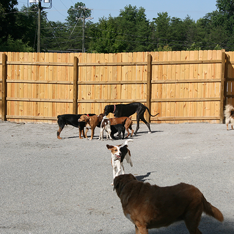 Group of dogs playing near a fence