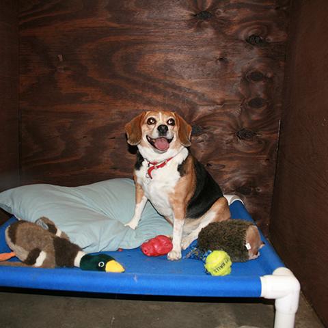Happy dog on dog bed