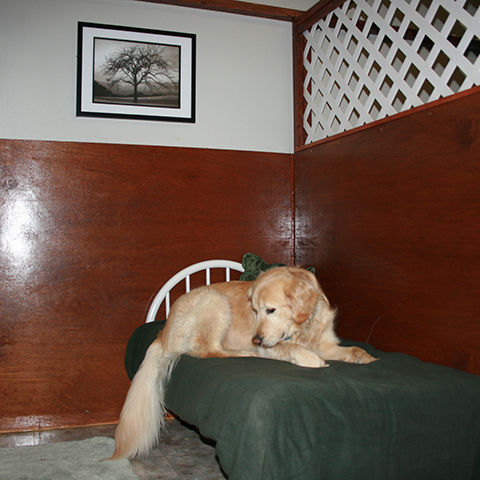 Golden Laying in Suite