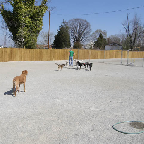 outdoor play area four paws pet resort